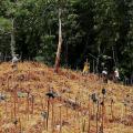 Aufforstungsprojekte sind nur eine von vielen Möglichkeiten zur Wiederherstellung von Ökosystemen. (Bild: Simeon Max, Restor AG)