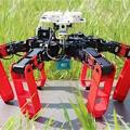 """Antbot"""": Vorbild ist die Wüstenameise (Foto: Julien Dupeyroux, CNRS, AMU)"""