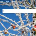 In China gesperrt: Bing (Bild: Screenshot)