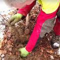 Netstream pflanzt Bäume (Bild: Screenshot von Netstream-Video)