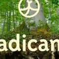 Setzt auf Nachhaltigkeit: Radicant (Bild: zVg)