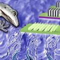 Gecko-Vorbild: Feinste Stege sorgen für starke Haftung (Symbolbild: gatech.edu)